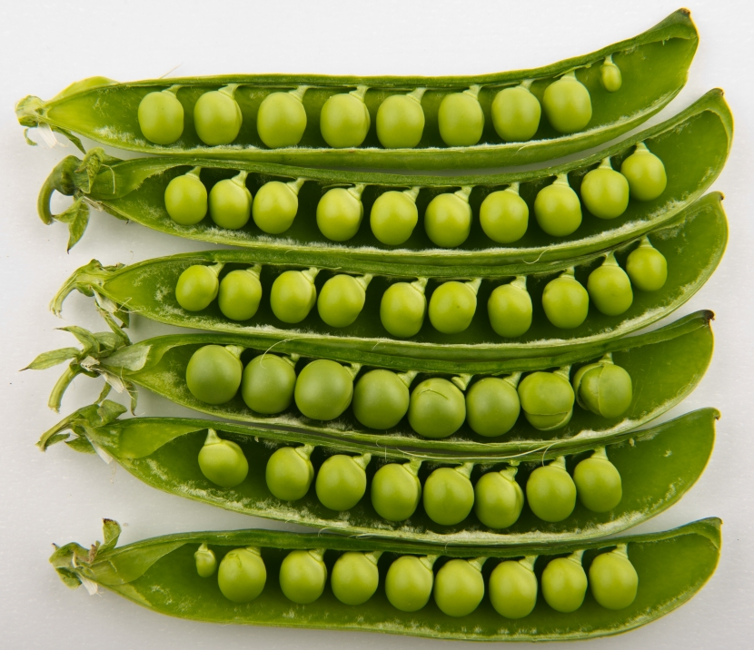 Peas_in_pods_-_Studio